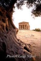 il tempio della consordia nella Valle dei templi  - Agrigento (4927 clic)