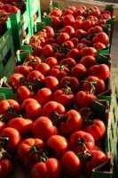 pomidoro di donnalucata  - Scicli (3905 clic)