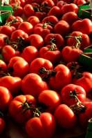 pomidoro di donnalucata  - Scicli (4060 clic)