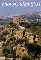 valle dei templi e tempio della concordia  - Agrigento (1856 clic)