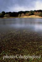 il lago artificale maulazzo sui nebrodi  - Cesarò (3782 clic)