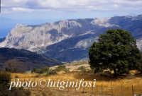 le rocche del crasto sui nebrodi  - Cesarò (3701 clic)