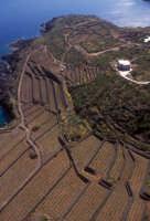 vigneto sulla costa di agadir  - Pantelleria (3867 clic)