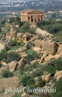 scorcio della valle dei templi con il tempio della concordia  - Agrigento (2106 clic)
