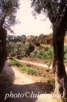il giardino della kolimbetra  - Agrigento (2362 clic)