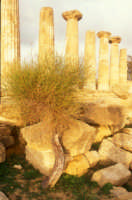 il tempio di ercole  - Agrigento (2663 clic)