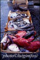 il mercato del pesce  - Marsala (1244 clic)