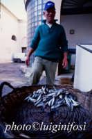il mercato del pesce  - Marsala (1255 clic)