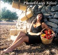 Campagna Regione Siciliana soat 35 Iblei...baciati dalla natura, amati dalla gente  - Donnafugata (4591 clic)