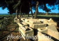 Megara Hiblea - il cimitero  - Augusta (3843 clic)