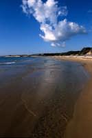 la spiaggia degli americani  - Irminio (3993 clic)