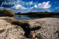 la foce del fiume irminio  - Irminio (3263 clic)