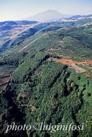 la vegetazione boschiva dei nebrodi con l'etna sullo sfondo  - Nebrodi (5113 clic)
