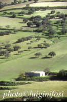 tipico paesaggio ibleo  - Iblei (4426 clic)