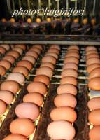 uova  - Ragusa (2832 clic)