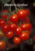 pomodorino pachino  - Pachino (4136 clic)