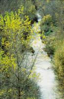 la valle del sosio  - Lucca sicula (3960 clic)