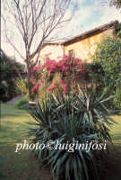 la villa del biviere di lentini  - Biviere (3766 clic)