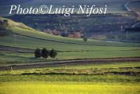 panorama della campagna di Vizzini  - Vizzini (7154 clic)