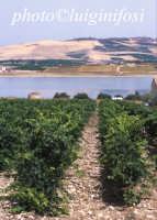 i vigneti Planeta e il lago Arancio  - Sambuca di sicilia (7049 clic)