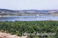 i vigneti Planeta e il lago Arancio  - Sambuca di sicilia (6599 clic)