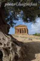 il tempio della concordia  - Agrigento (1912 clic)