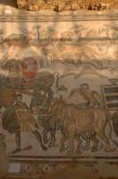 mosaici dalla grande caccia, villa romana del casale  - Piazza armerina (4071 clic)