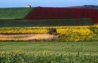 i colori della campagna marsalese  - Marsala (1578 clic)