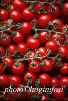pomodorino pachino  - Pachino (5741 clic)