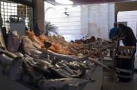 il mercato ittico la mattina  - Marsala (3068 clic)
