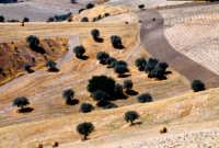 paesaggio ibleo  - San giacomo (2921 clic)