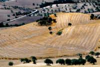 paesaggio ibleo  - San giacomo (3710 clic)