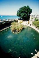 la fontana aretusa  - Siracusa (5213 clic)