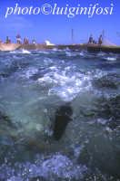 l'ingresso dei tonni nella camera della morte  - Favignana (8004 clic)