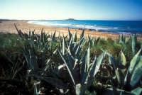 la spiaggia di isola delle correnti  - Portopalo di capo passero (7535 clic)