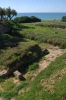 le fondamenta del tempio  - Camarina (4539 clic)