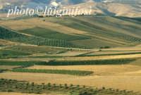 paesaggio  - Sambuca di sicilia (2712 clic)