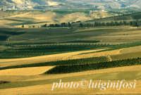 paesaggio  - Sambuca di sicilia (2893 clic)