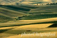 paesaggio  - Sambuca di sicilia (2540 clic)