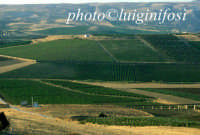 paesaggio  - Sambuca di sicilia (2857 clic)