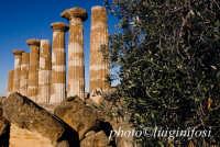 valle dei templi, resti del tempio di ercole  - Agrigento (1991 clic)