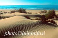 le dune della spiaggia di C.da Pisciotto  - Sampieri (7885 clic)