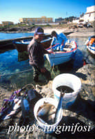 antonio chiaramida ritorna dalla pesca  - Portopalo di capo passero (5543 clic)
