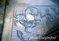 mosaico delle terme romane  - Comiso (3055 clic)