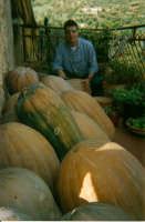 Una raccolta di straordinarie zucche gialle.  - Mistretta (9295 clic)