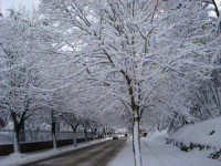 Via Libertà Il viale dei tigli un giorno d'inverno.  - Mistretta (6208 clic)