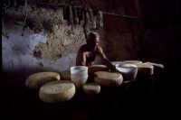 produzione artigianale di ricotta e pepato: in cantina stagionano le forme  - Mineo (3616 clic)