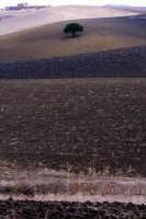 paesaggio ottobrino  - Aidone (3269 clic)