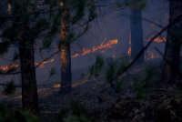 etna eruzione 2002: la pineta di piano provenzana in fiamme  - Etna (5396 clic)