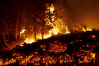 etna eruzione 2002: la pineta di piano provenzana in fiamme  - Etna (11959 clic)